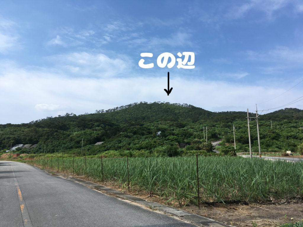 銭田集落の方から見た塩原城。木々に囲まれていて何も見えない